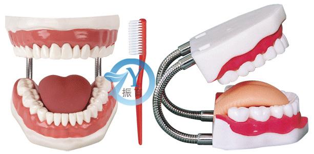 口腔牙护理训练模型