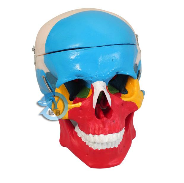 共显示14个结构.包含脑颅骨(共8块)